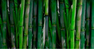 hero-bamboo-desktop_1200x@2x.progressive