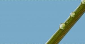 why-bamboo-less-water_1200x@2x.progressive