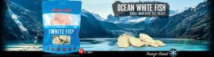 singles-ocean-white-fish-banner
