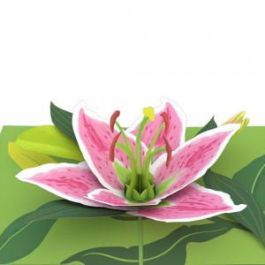 Lily_Bloom_Detail_1024x1024